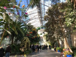 Orchid Spectrum at US Botanic Garden