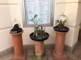 Orchids displayed in cloches