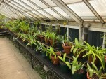Orchids lined up on shelves