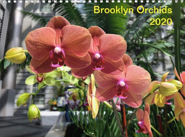 Brooklyn Orchids 2020 Calendar