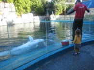 Nora's encounter with a Beluga.