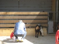 Dad and daughter vs a goat.
