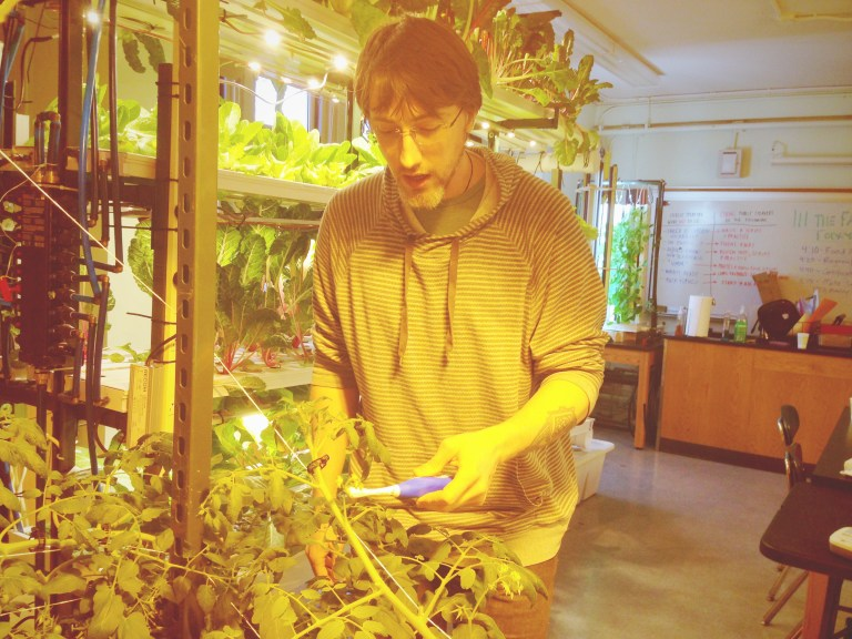 Mr. Hillier using an electric tooth brush to do the pollination for the tomato plant.