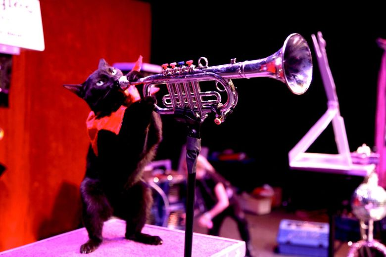 An Acro-Cat Performer Playing the Trumpet