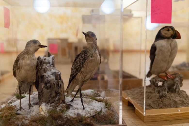 Reading Zoo is a new story book-based exhibit draws inspiration from the Brooklyn Children's Museum's collection of animal taxidermy.