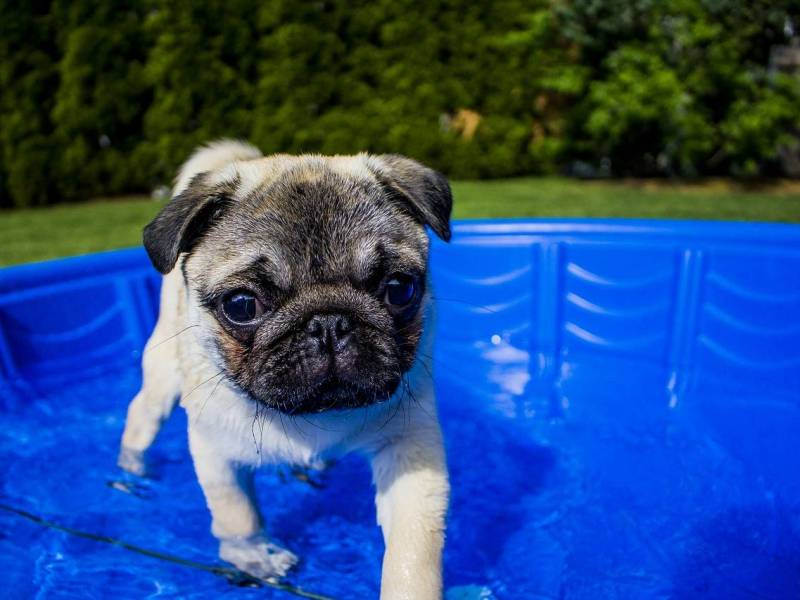Also doggies can party for a purpose, according to the team of Bushwick Bark who will be throwing the Fifth Annual Doggy Pool Party Fundraiser on Saturday at Norwind's.