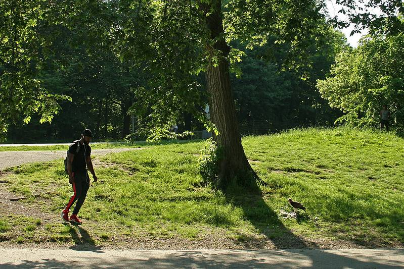 COVID-19; Social Distancing; Open Streets; Prospect Park