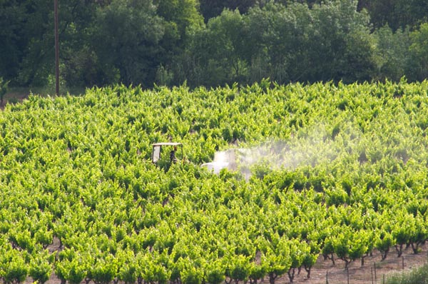 Spraying the vineyards in Languedoc