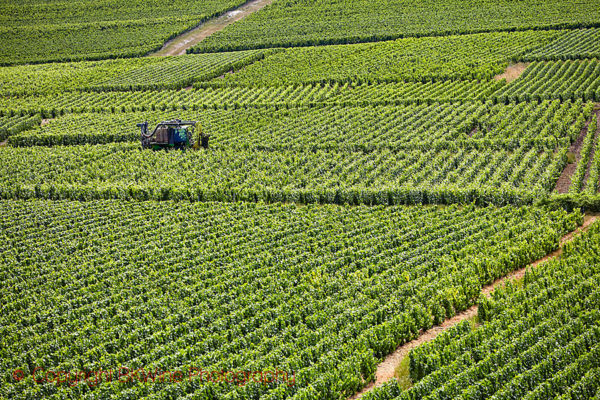 A tractor for treatments in a vineyard in Champagne