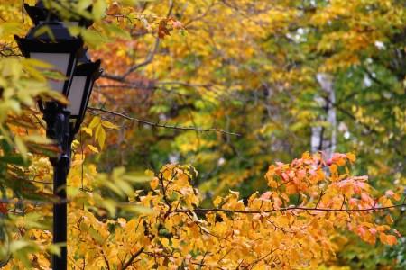 Diagnostic pollution lumineuse pour réduire votre impact environnemental