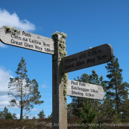 Lichen on the Abriachan path sign.
