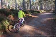 Riding through the Rothiemurchus Forest.