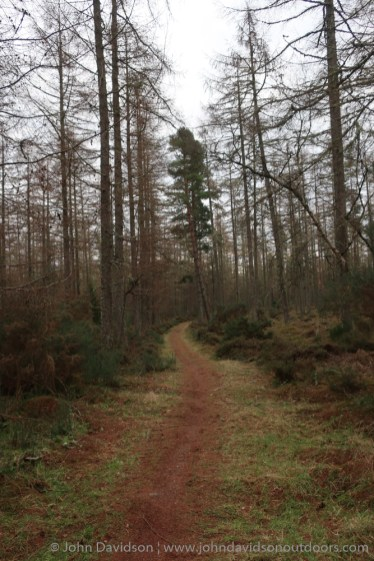 A series of excellent trails wind their way through the woods.