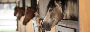 cheval écurie- blablaturf.com
