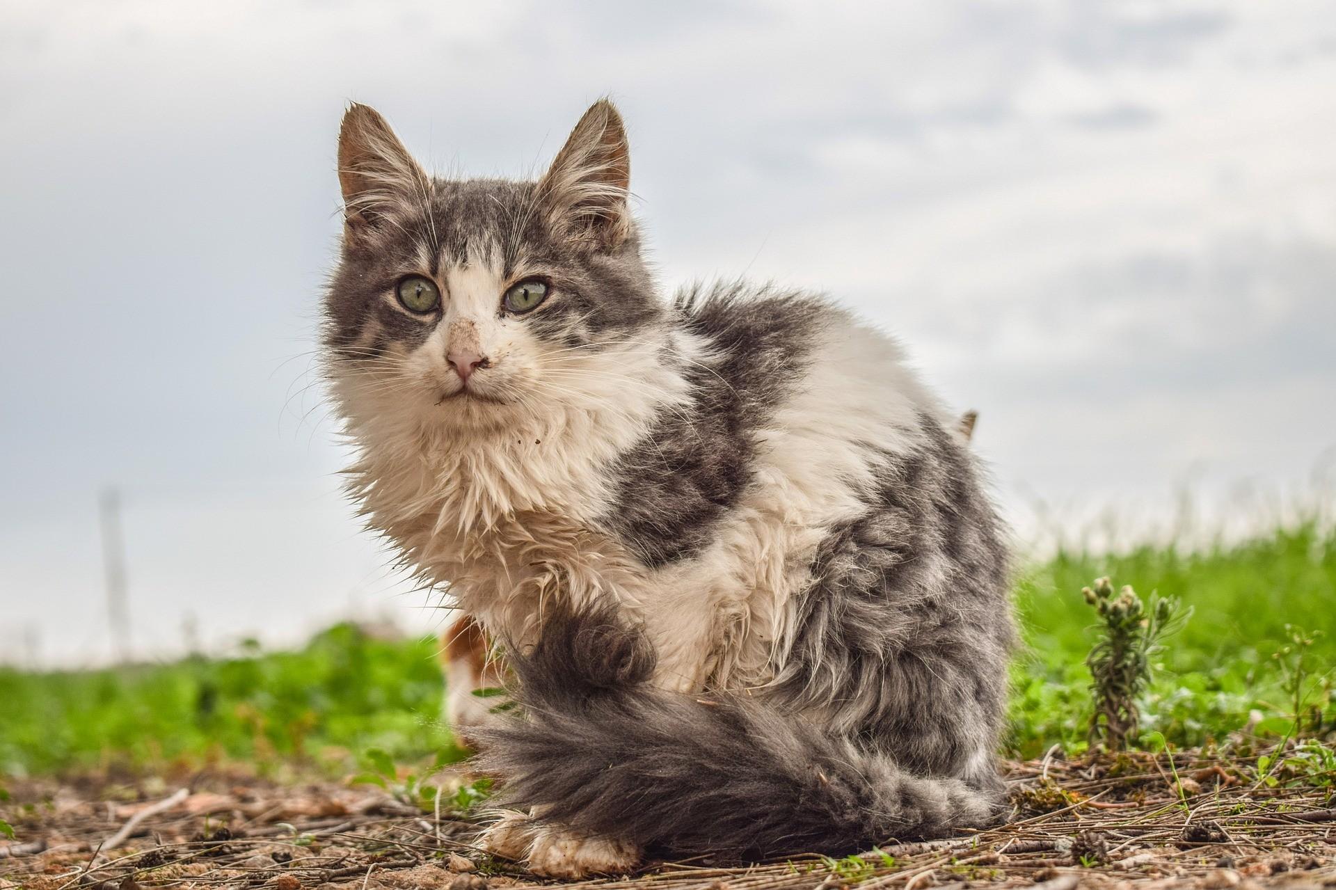cat in terrible weather