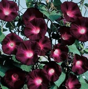 black flowers gothic gardens