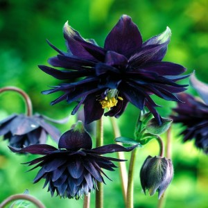 gothic flowers archives black