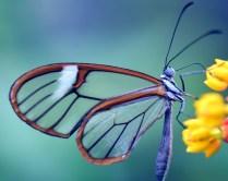 butterfly-2147812_1920