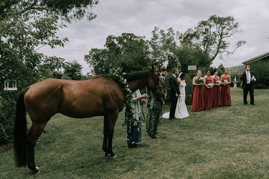 horse joining wedding ceremony in Buxton farm Victoria captured by Black Avenue Productions