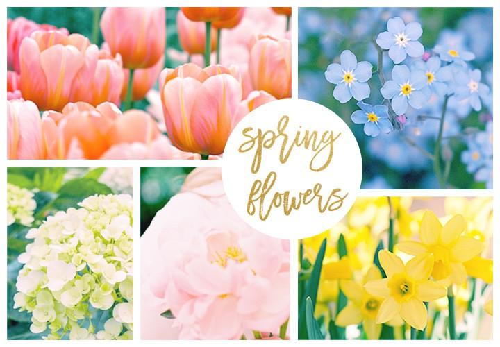 hero-spring-flowers-720x500