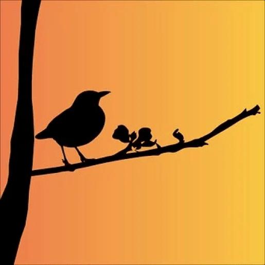 Blackbird Writers