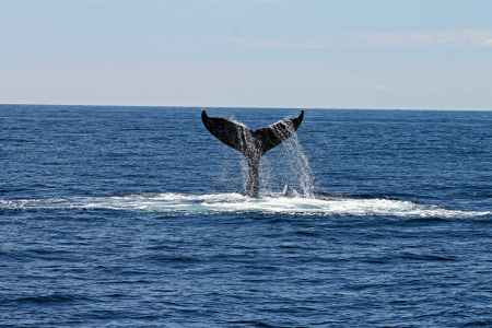whale s tail