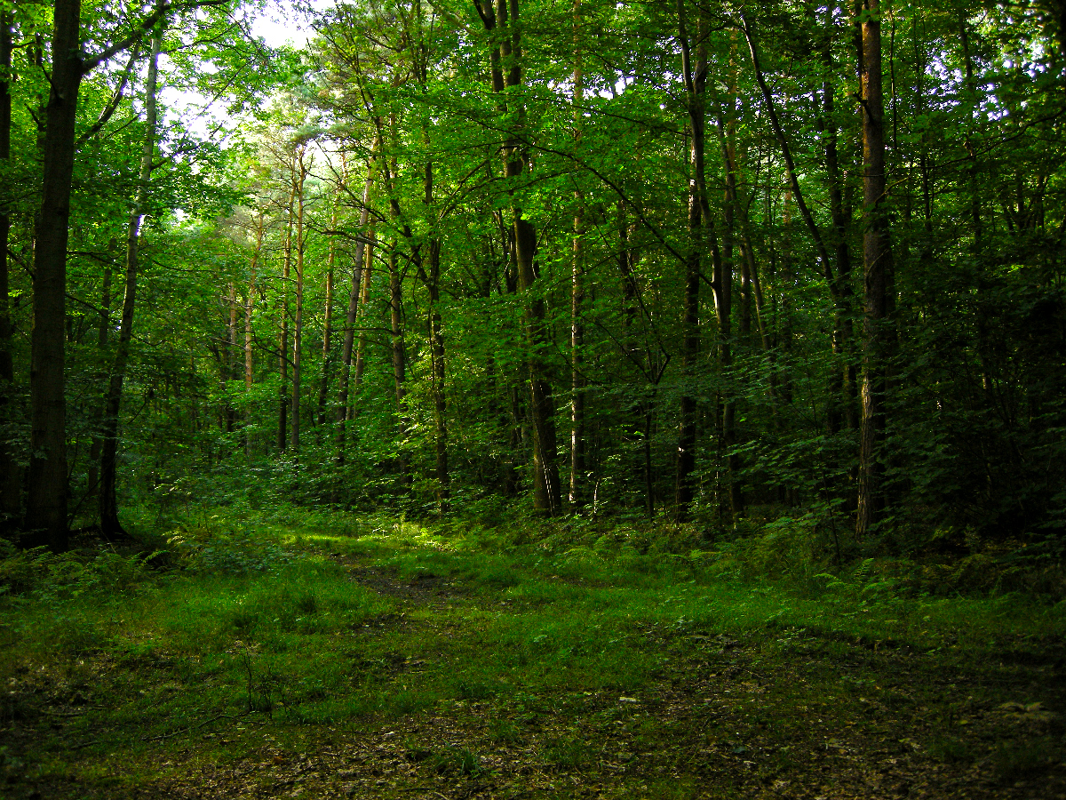 Forest Images  Reverse Search