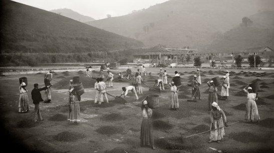 Slaves working in a coffee field in Vale do Paraíba, São Paulo cerca 1882
