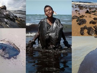 Oil spill disaster in Brazil: Environmental Racism of the government