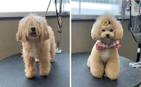 Meet the Shaggy Dogs Who Have Become Perfect Pooches After Grooming Parlours Open Again