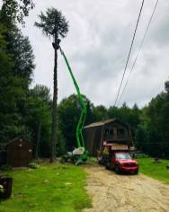 Tree-Removal-4