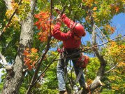 Tree Pruning Southern Vermont