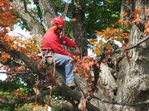 Deerfield Valley Woodlot management treecare professional