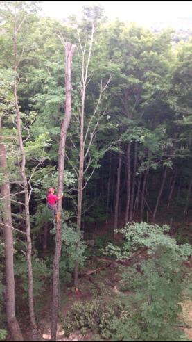 Vermont Tree Climbers