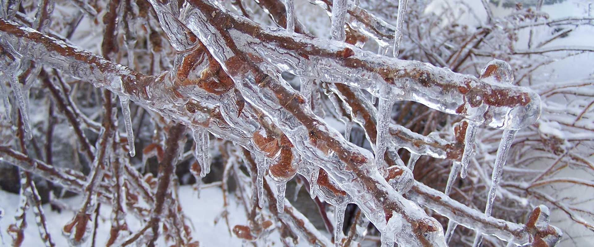 Deerfield Valley Winter Tree Service