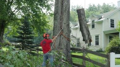 Tree Removal Vermont