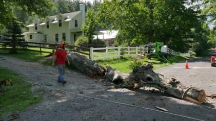 Tree falling wilmington vt