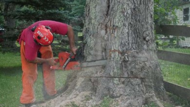Tree removal services VT
