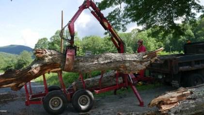Vermont tree removal company