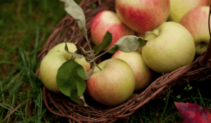 Apples in a basket sitting on grass