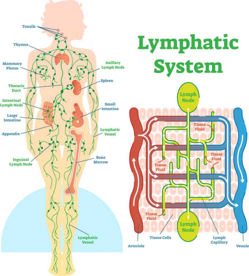 5 Reasons Why Your Lymph Nodes Are Swollen Blackdoctor