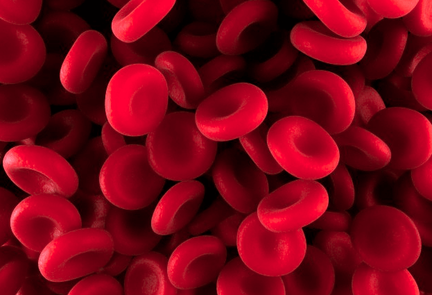 Microscopic image of red blood cells