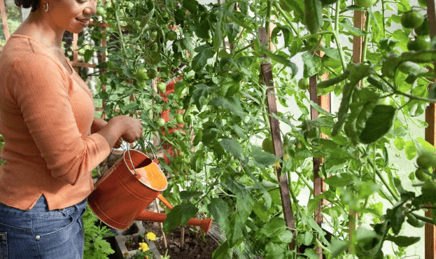 A woman watering a home gardening