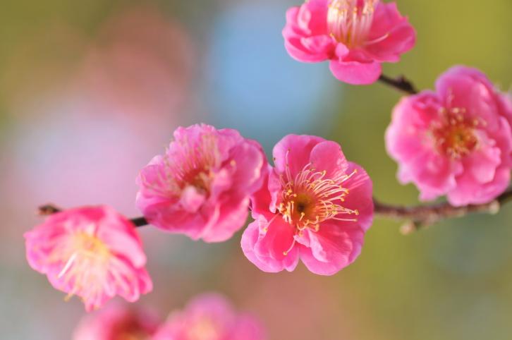pink flowrs