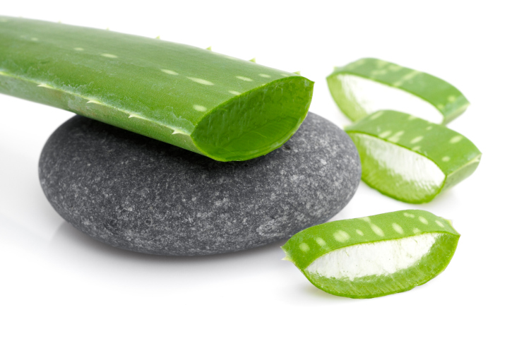 aloe vera on rock