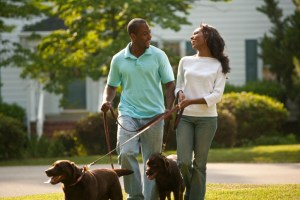 couple walking dogs
