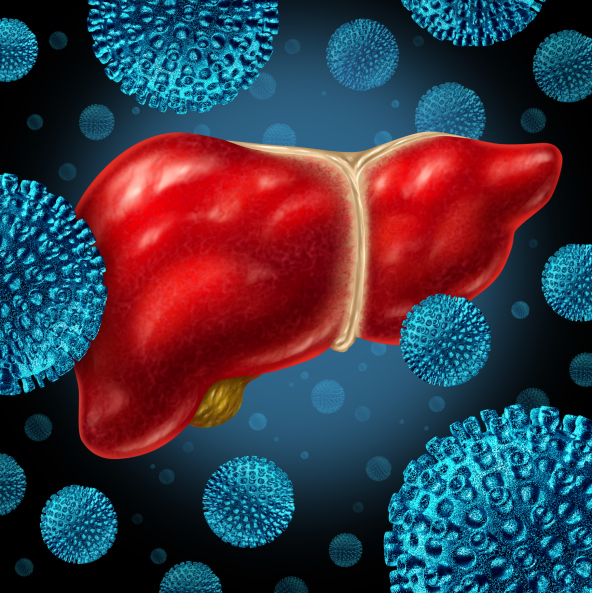 animated liver hepatitis infection