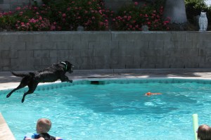 Raven retrieve training-17