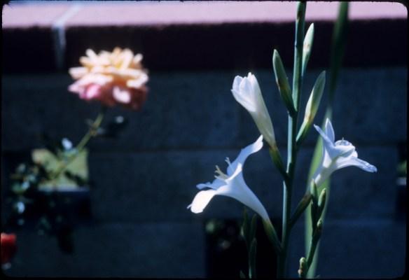 1971-04- Easter on Hamlin (8)
