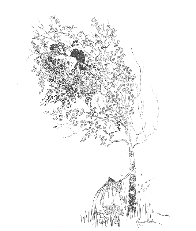 Child hiding from witch in tree illustration